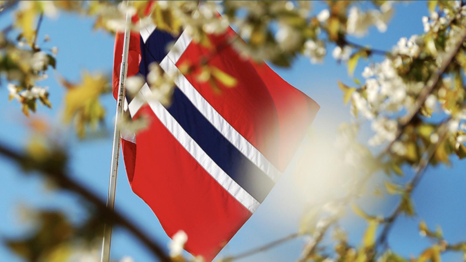 norsk flagg gjennom blader