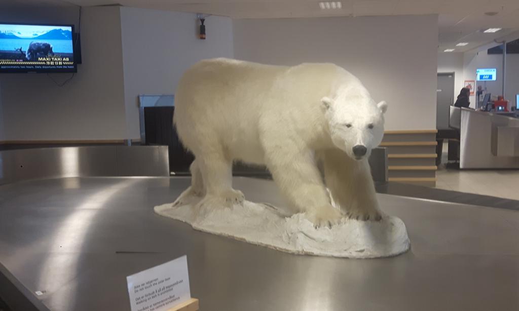 Isbjørn på flyplassen, utstoppet